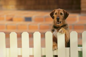 Things to Consider Before Installing a New Fence