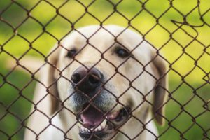 What to Think About When It Comes to Big Dog Fences